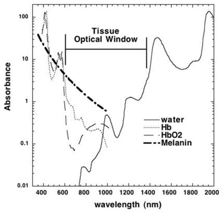 "Tissue absorption spectrum showing ""optical window"" due to reduced absorption at 600-1200 nm."